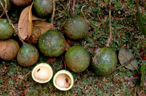 What You May Not Know About Avocados   Denise Minger