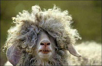 bad_hair_day